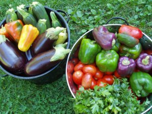 Fresh peppers, eggplant, tomatoes, zucchini, parsley